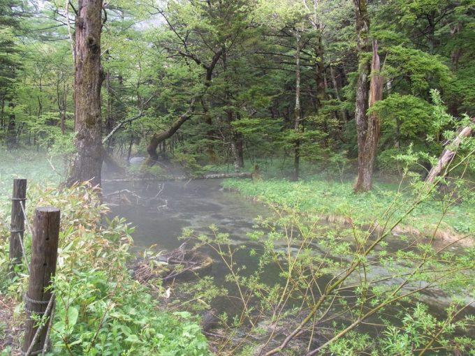 初夏の雨の上高地川霧に包まれる幻想的な清水川