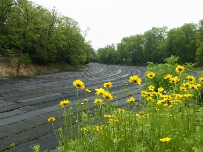 信州安曇野大王わさび農場梅雨入り時の美しい緑