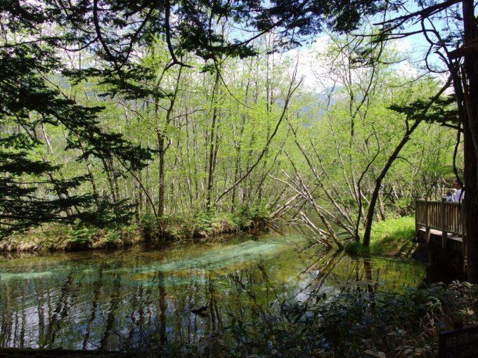 初夏の上高地木陰の中から眺める鮮やかな新緑