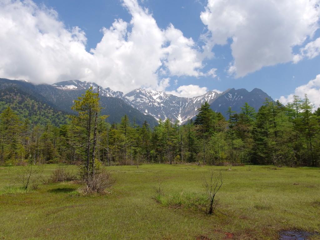 初夏の上高地柔らかな緑に覆われる田代湿原