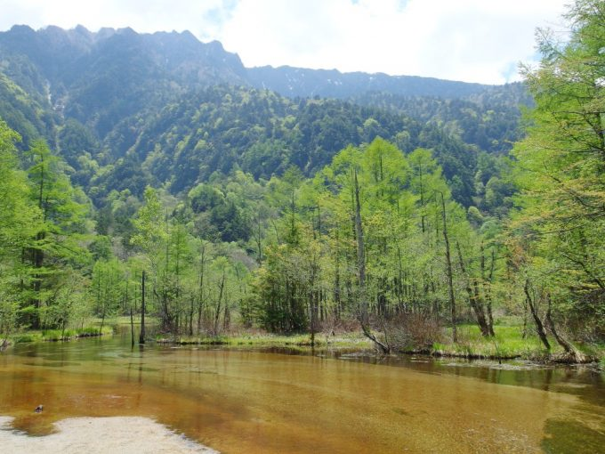 初夏の上高地アルプスに広がる浅く広い田代池