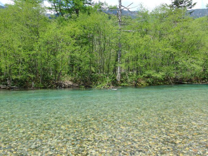 初夏の上高地水深によりその色を変える梓川の流れ