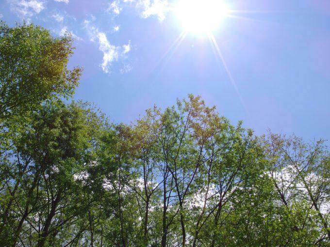 初夏の上高地全身に浴びる爽快な日差しと新緑