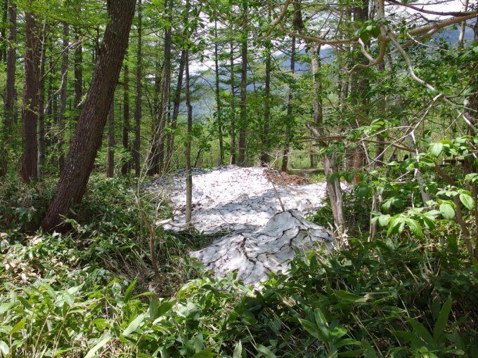 初夏の上高地新緑と残雪の対比