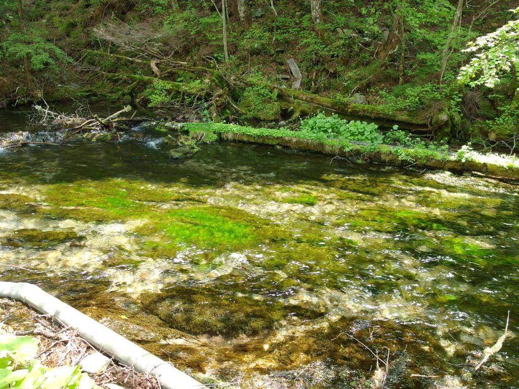 初夏の上高地貴重な水源清流清水川