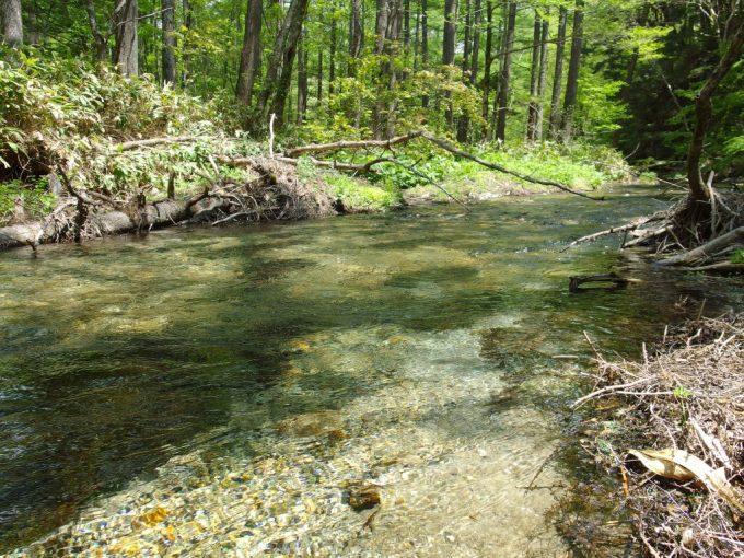 初夏の上高地どこまでも清らかで透き通る清水川