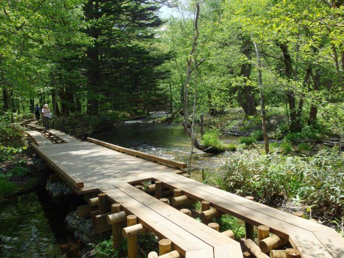 初夏の上高地森と水と戯れながら歩く木道