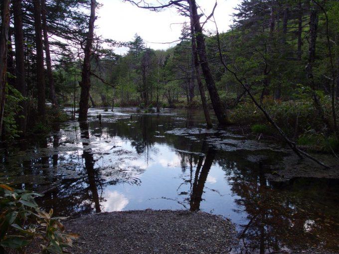日が陰り怖さを感じる上高地の湿地