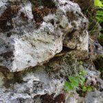 白骨温泉の成分の濃さを物語る噴湯丘の石灰岩