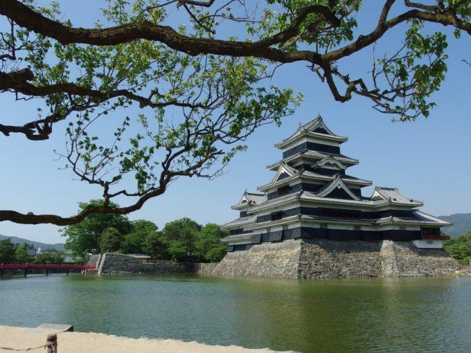 国宝松本城を彩る初夏の青空と青い松