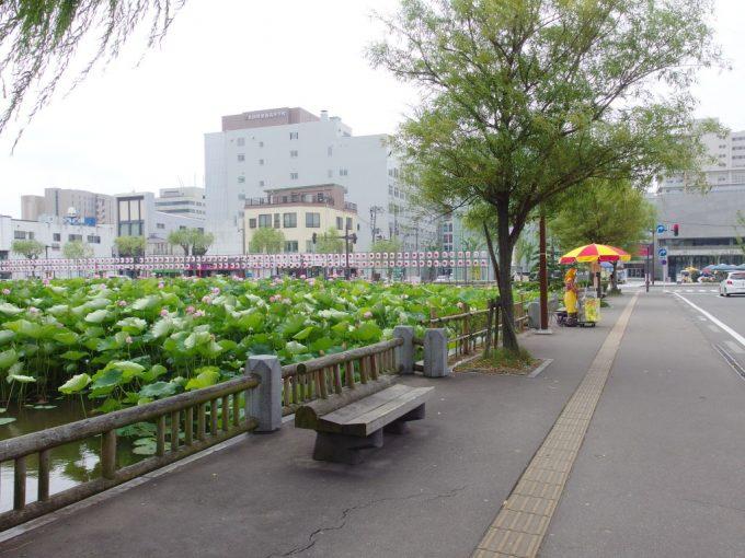 秋田久保田城址千秋公園夏のお堀端を彩るババヘラアイスの屋台