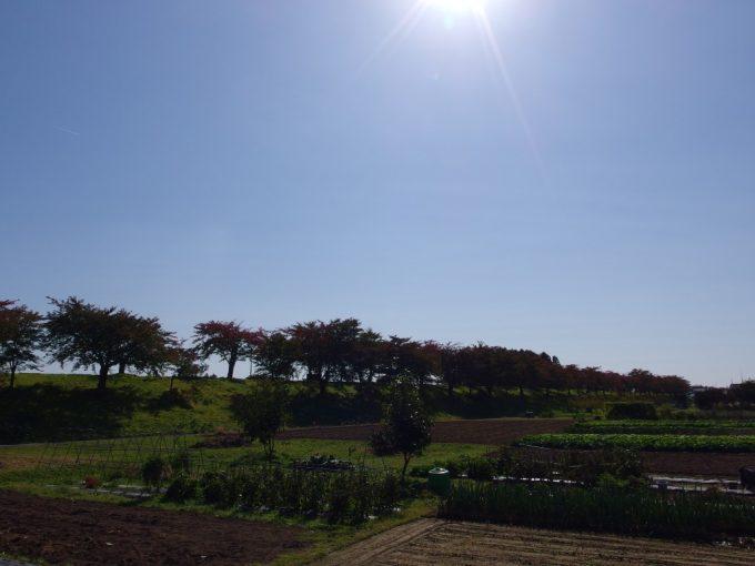 秋晴れの北上川堤防
