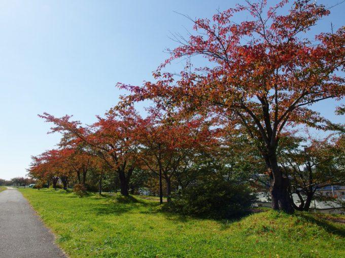 北上川を彩る桜紅葉と秋晴れの空