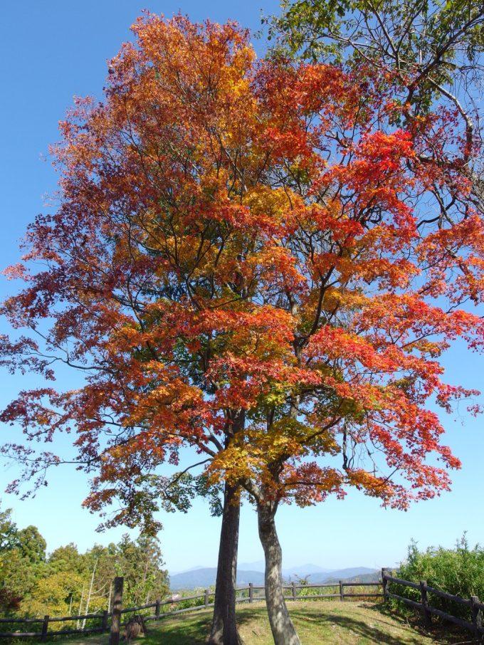 花巻城跡本丸跡鳥谷ヶ崎公園秋晴れの青空に映える紅葉