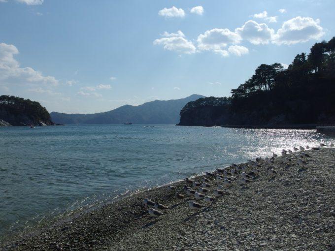 輝く浄土ヶ浜の海を眺めるうみねこたち