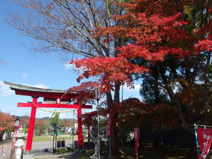 秋の巽山公園赤鳥居と紅葉の競演