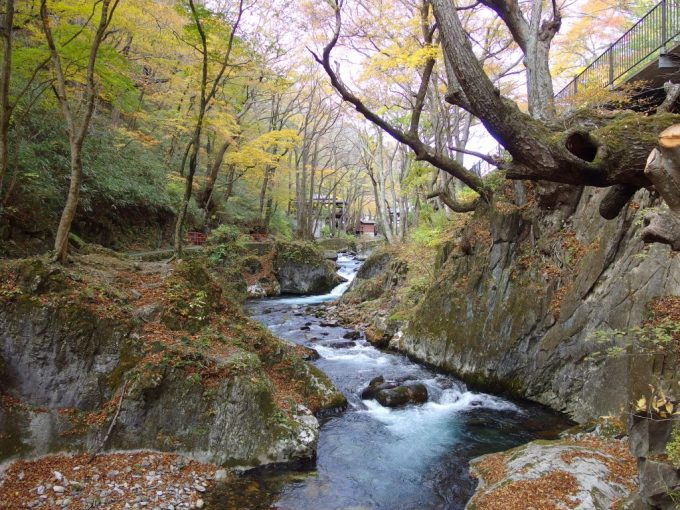 龍泉洞の水が流れる渓流沿いの遊歩道