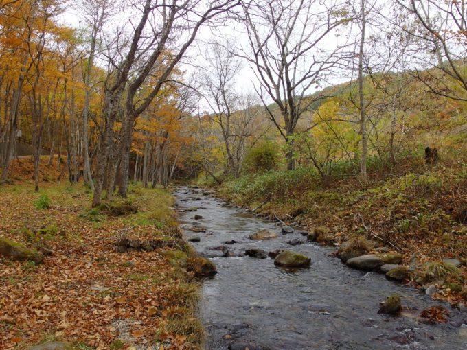 秋の龍泉洞木々に彩られた小川