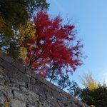秋の盛岡岩手公園石垣を彩る紅葉