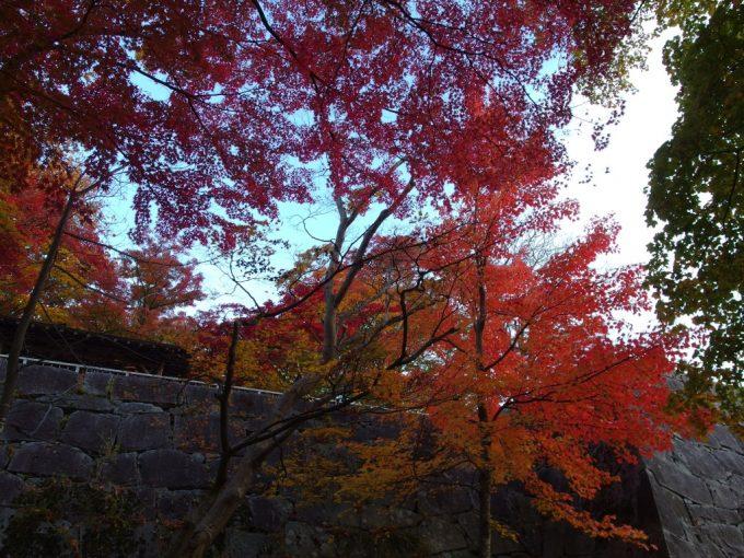 秋の盛岡夕方の盛岡城跡石垣と紅葉のグラデーション