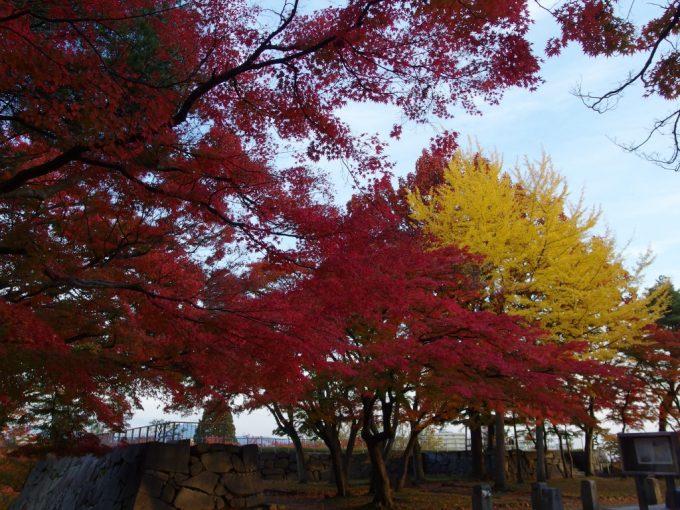 秋の盛岡夕方の岩手公園紅葉と銀杏の競演