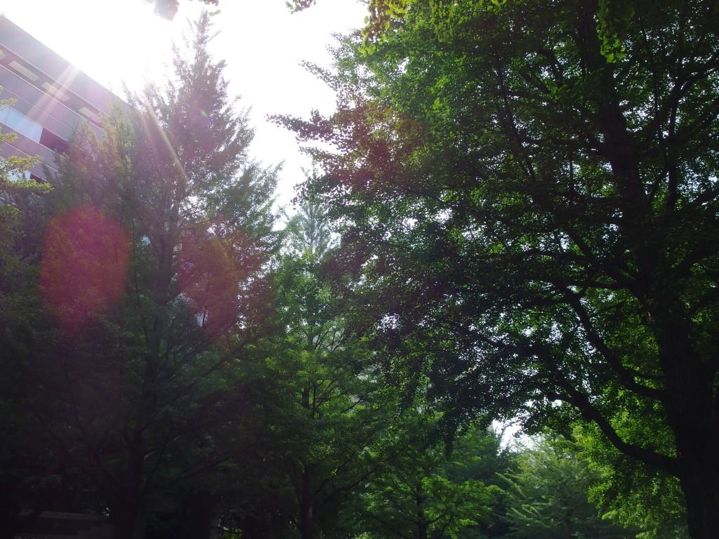 杜の都仙台街路樹越しの朝日