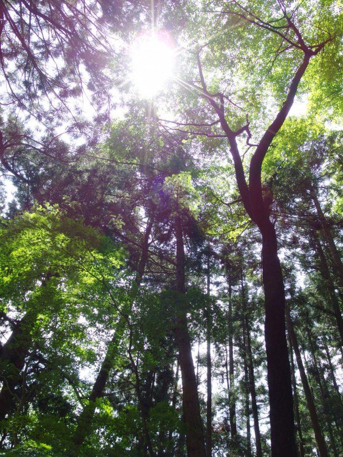 初夏の平泉中尊寺新緑越しの太陽