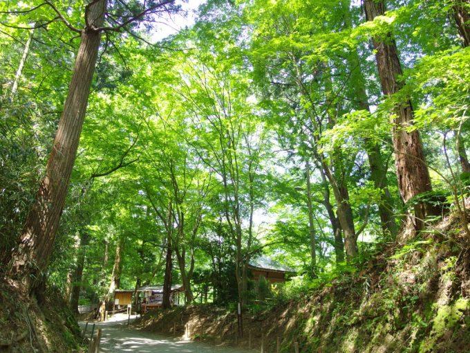 初夏の鮮やかな緑に包まれる平泉中尊寺参道