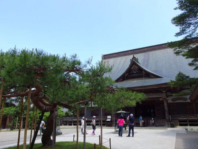 立派な枝ぶりの松と大屋根が荘厳な中尊寺本堂