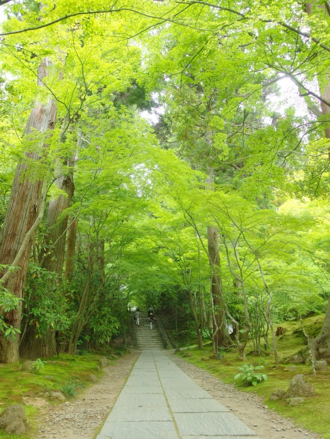 柔らかい緑に覆われた初夏の円通院