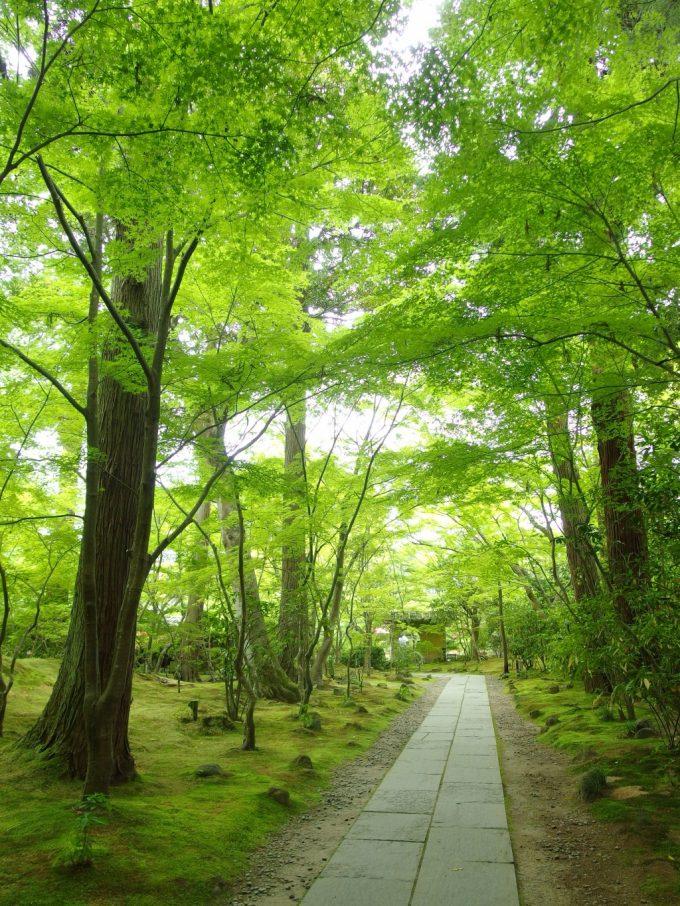 若葉と苔緑の世界に包まれる初夏の松島円通院