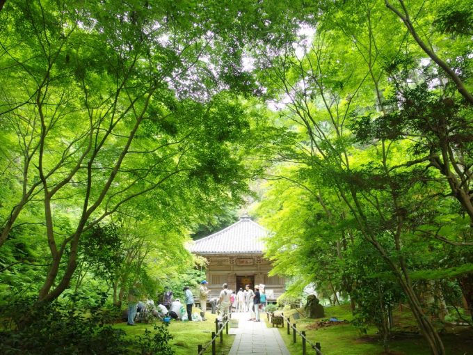 初夏の松島円通院三慧殿と庭を手入れする人々