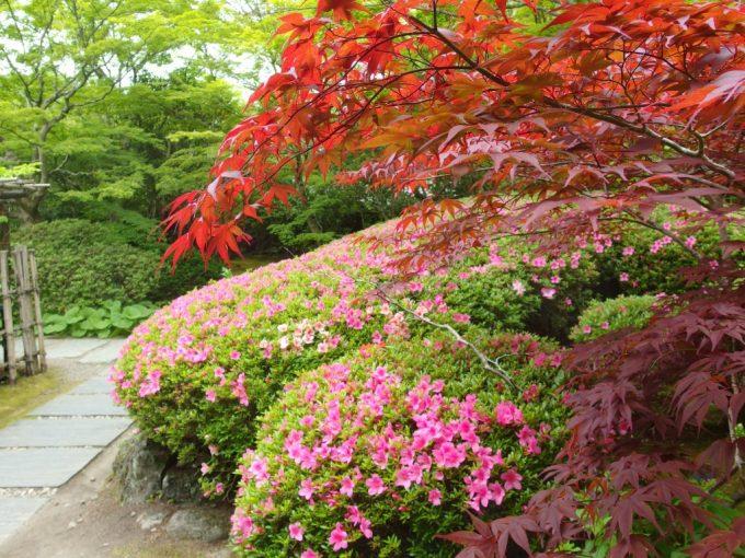 初夏の松島円通院新緑とさつき、色づく紅葉