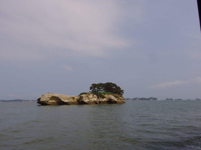 日本三景松島奇岩に生える松