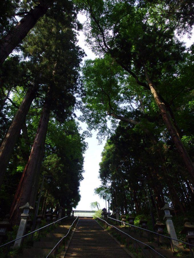 見上げるほどの杉並木に守られる鹽竈神社表参道石段