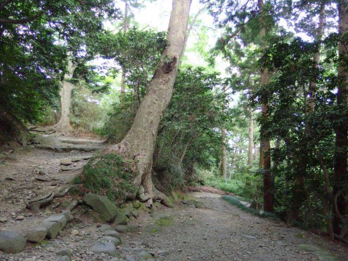 木々が鬱蒼と茂り昼なお暗い鹽竈神社最古の参道七曲り坂