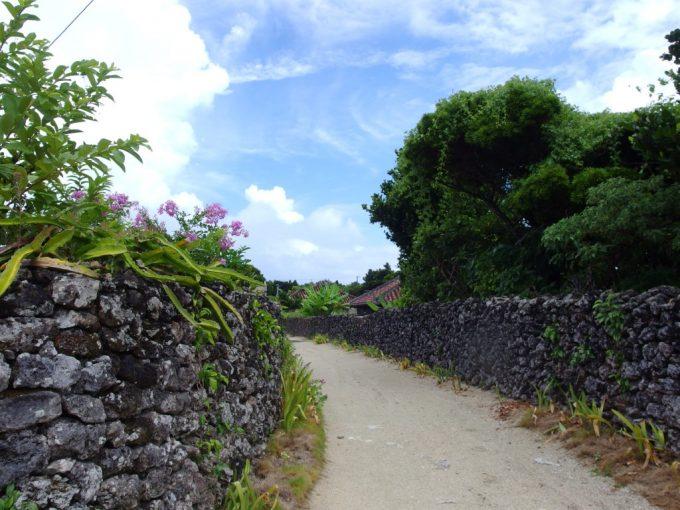 竹富島ごつごつとした珊瑚の石垣に生えるたくさんの植物