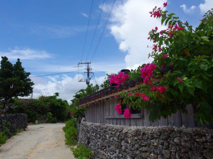 竹富島古い家の軒先を彩るブーゲンビリアと戯れる黒い蝶