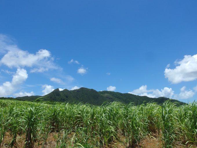 夏空の下聳える石垣島前岳とサトウキビ畑