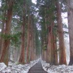 雪霧漂う戸隠神社奥社参道杉並木
