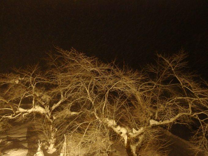 小野川温泉河鹿荘夜に輝く雪に染まる白い木