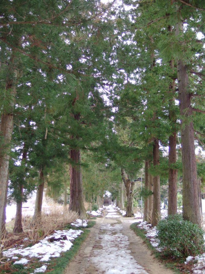 医王寺鯖野薬師堂への杉並木と参道