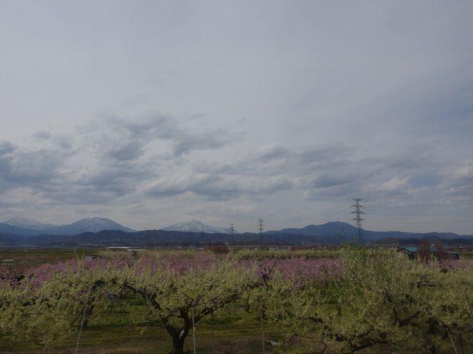 長野電鉄車窓に流れる紅白の桃の花