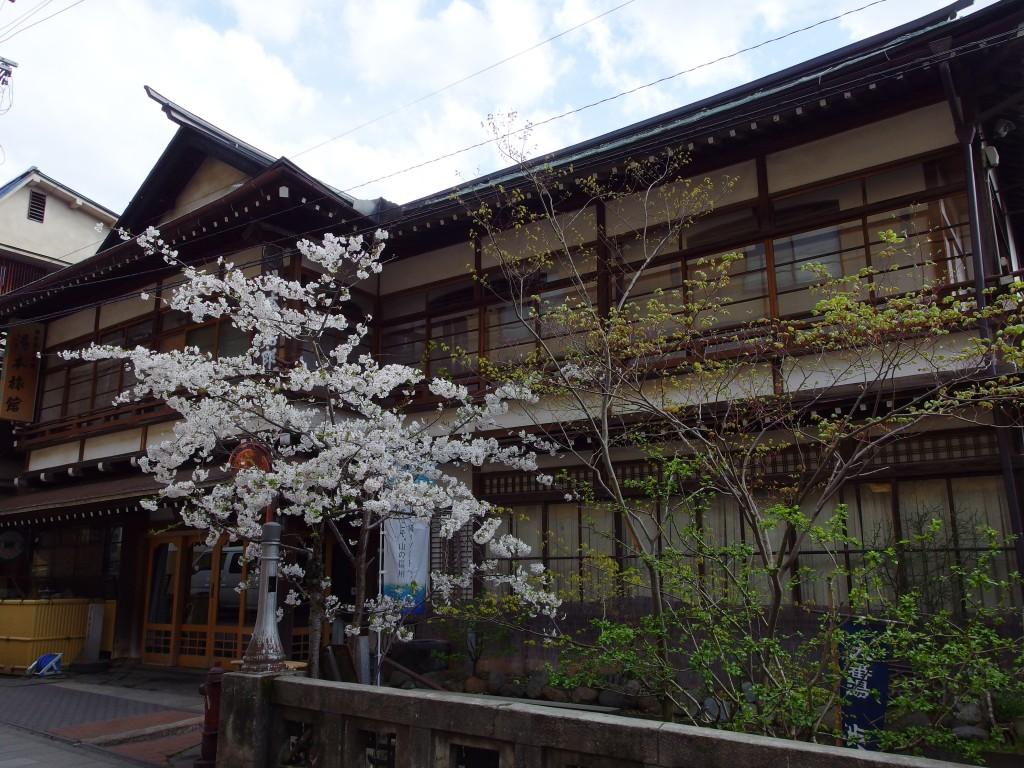 桜に彩られる春の湯田中渋温泉湯本旅館