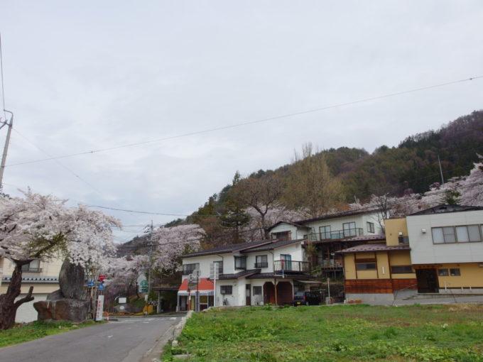 桜に彩られる湯田中の町