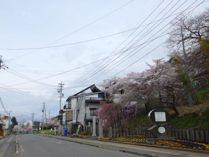 ソメイヨシノや枝垂れ桜に彩られる湯田中