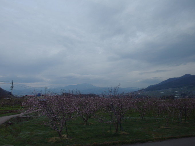 長野電鉄特急スノーモンキー車窓に広がる桃の花と北信五岳