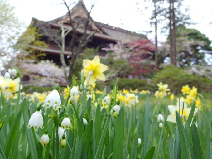 花々に彩られる春の善光寺さん