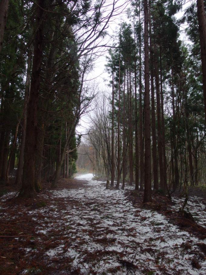 戸隠神社残雪に覆われた参拝古道