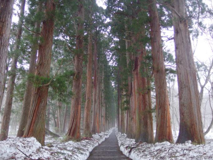 戸隠神社奥社参道に連なる荘厳な杉並木
